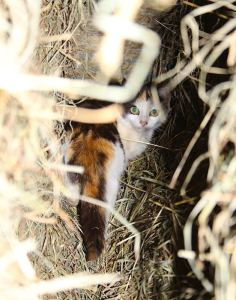 Cat in the straw