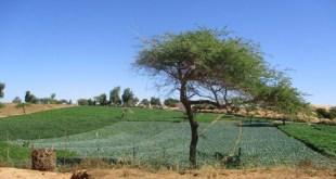 L'Agriculture, Levier Performant du Plan Sénégal Emergent (3)