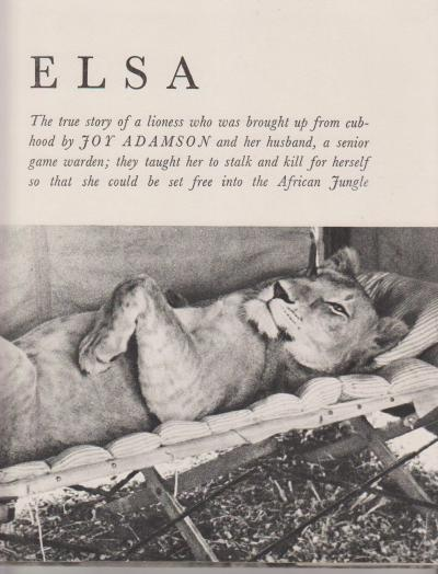 Elsa: The Story Of A Lioness | Novel Lines