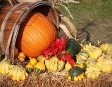 fall-harvest-14140189458ag