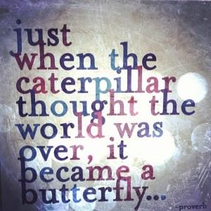 caterpillartobutterfly