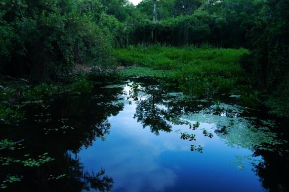 Everglades Floride-12