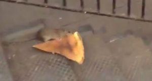#LoMasViral : La rata neoyorkina que hoy se está haciendo viral ¿Ya la viste?