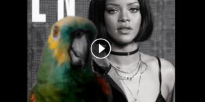 #LoMasViral Loro canta idéntico a Rihanna ¡Tienes que verlo! (+VIDEO)