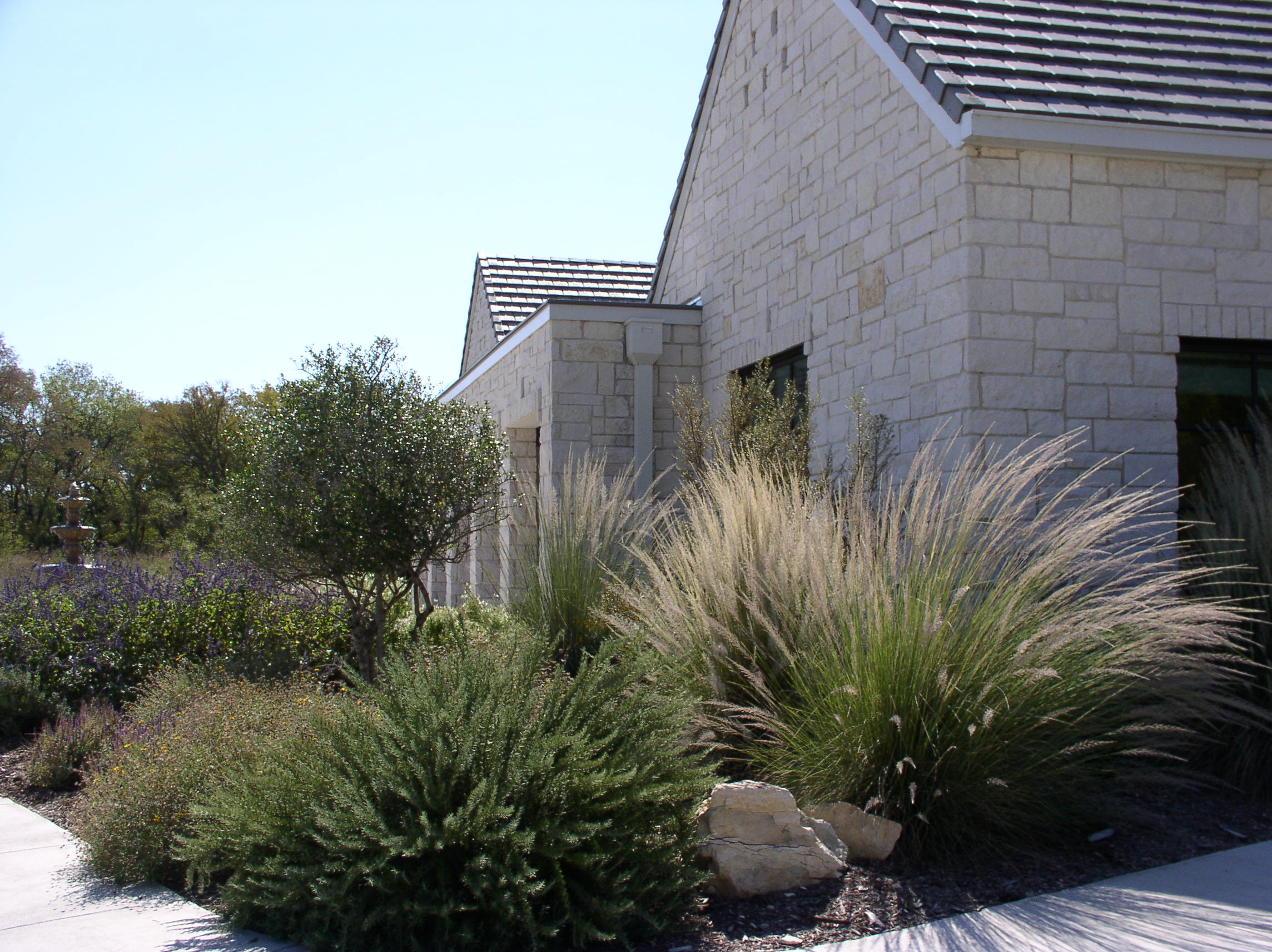 Landscaping Native Grasses : The texture of a lindheimer muhly grass stands out within mass