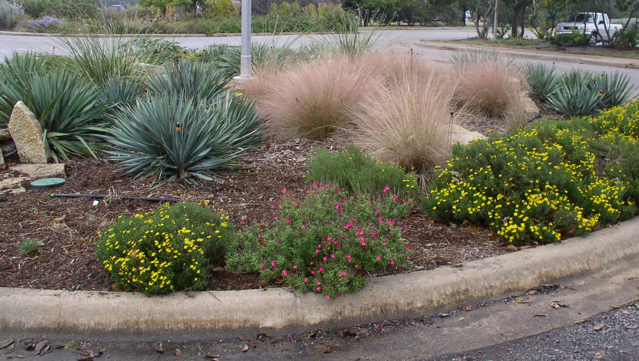 Landscaping With Evergreens And Grasses : Grasses in an urban landscape photo carol feldman