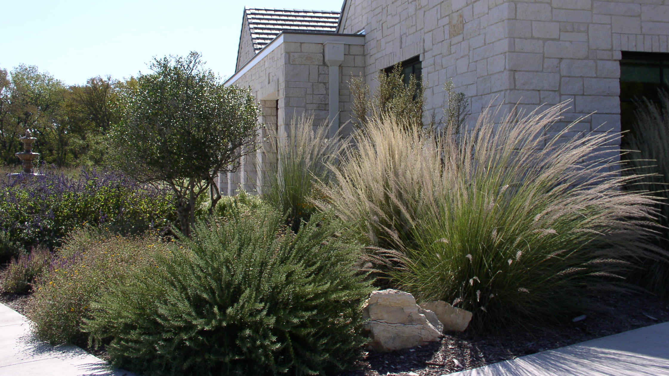 State Board Adopts Education Project Native Plant