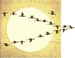 birds.9