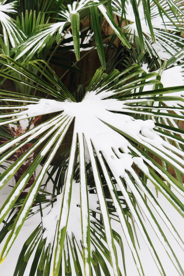 Nubby Twiglet | The Week + Links