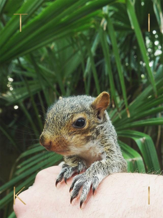 Nubby Twiglet | Meet Tiki