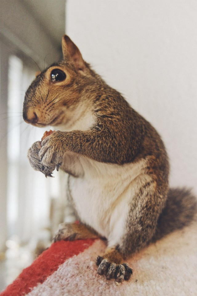 Nubby Twiglet | Tiki: The Squirrel Saga