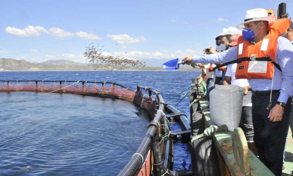 Ministerio de Agricultura asegura fomentar la producción de tilapia en Cotuí