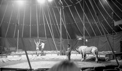 2 Circus