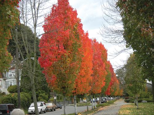 http://i2.wp.com/nwasianweekly.com/wp-content/uploads/2011/30_44/blog_trees.JPG?resize=500%2C375