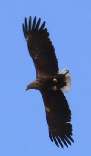 Hope Overhead 2