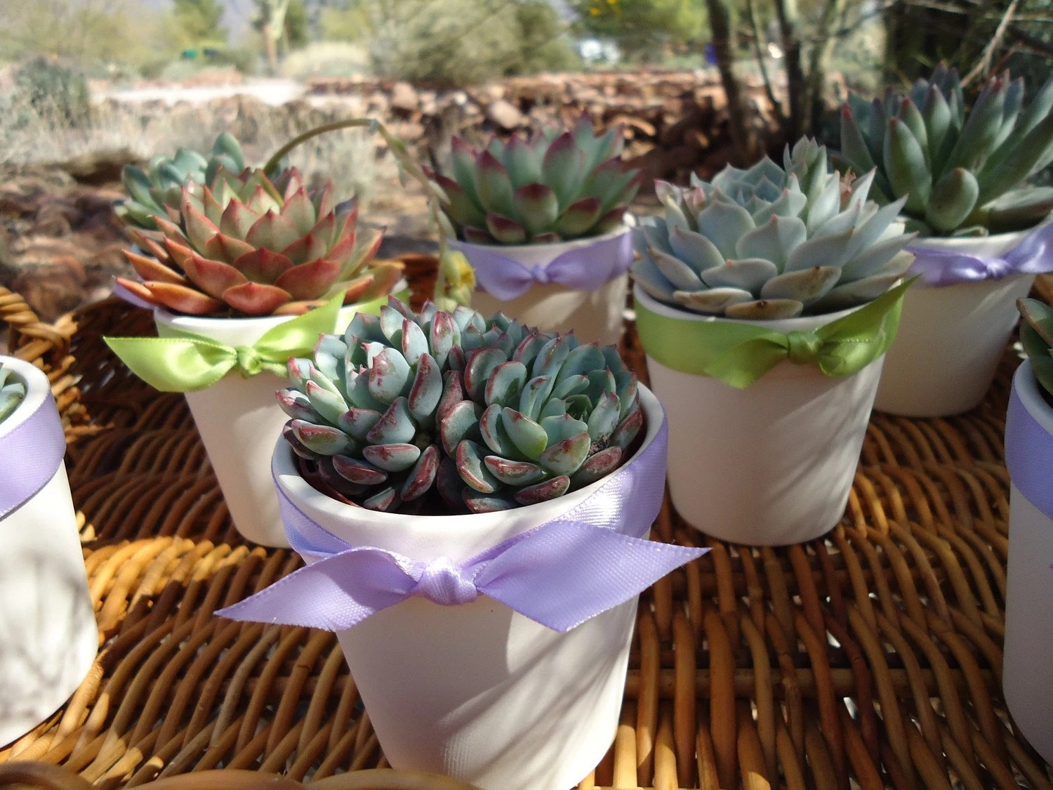 wedding wednesday etsy finds succulent designs succulent wedding favors Featured in Birds Blooms Magazine A Colorful Assortment of 12 Gorgeous Succulents Great