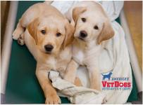 America's Vet Dogs - Puppy Friday