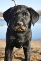 Leader Dogs for the Blind - Puppy Friday