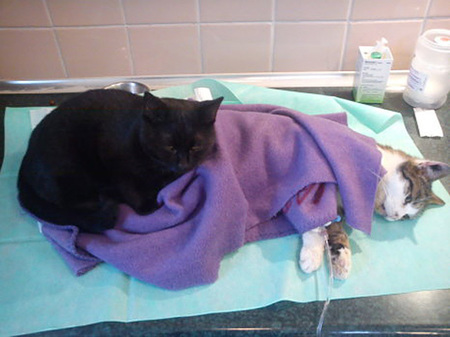 veterinary-nurse-cat-hugs-shelter-animals-radamenes-bydgoszcz-poland-3.jpg