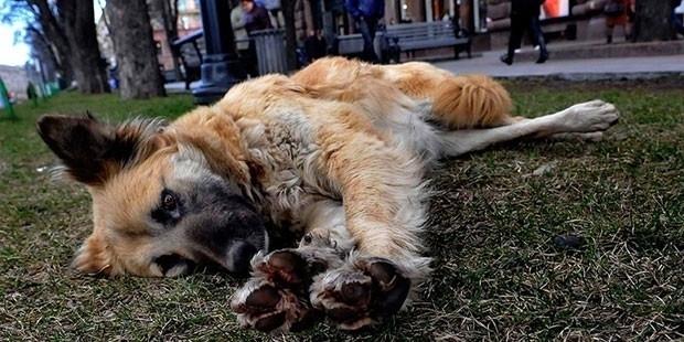 Tıp Profesörü, Sokak Köpeğini Bıçakladı!