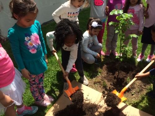 planting Sophia