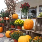 WestviewCiderMillFeature1Pumpkins