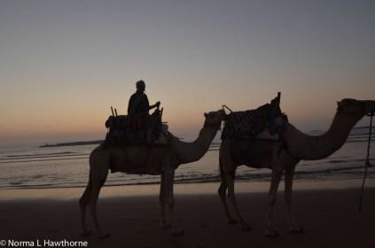 Sept24_CamelsSunset-12