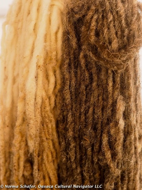 Pericone or wild marigold dyed on white and grey churro wool