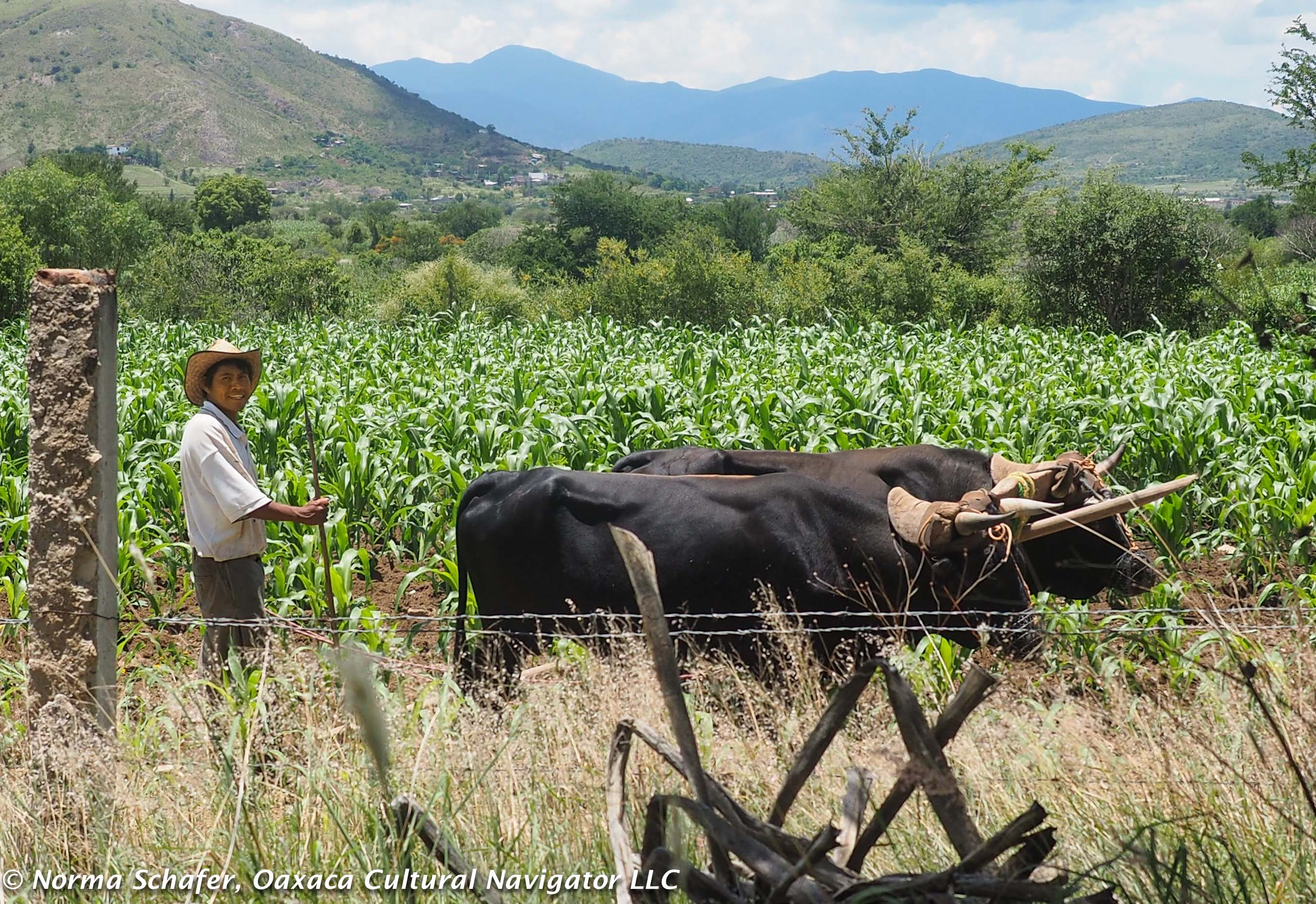 Living In Mexico Oaxaca Cultural Navigator Norma Schafer