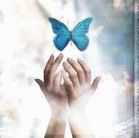 imagen-mariposa
