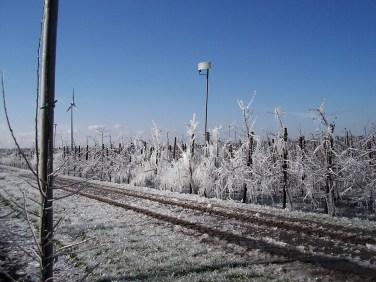 Frostschutzberegnung