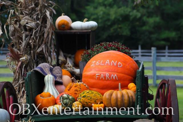 Island Farm Outer Banks Pumpkin Patch - October 4, 2014 (photo by Matt Artz for OBXentertainment.com)_0001