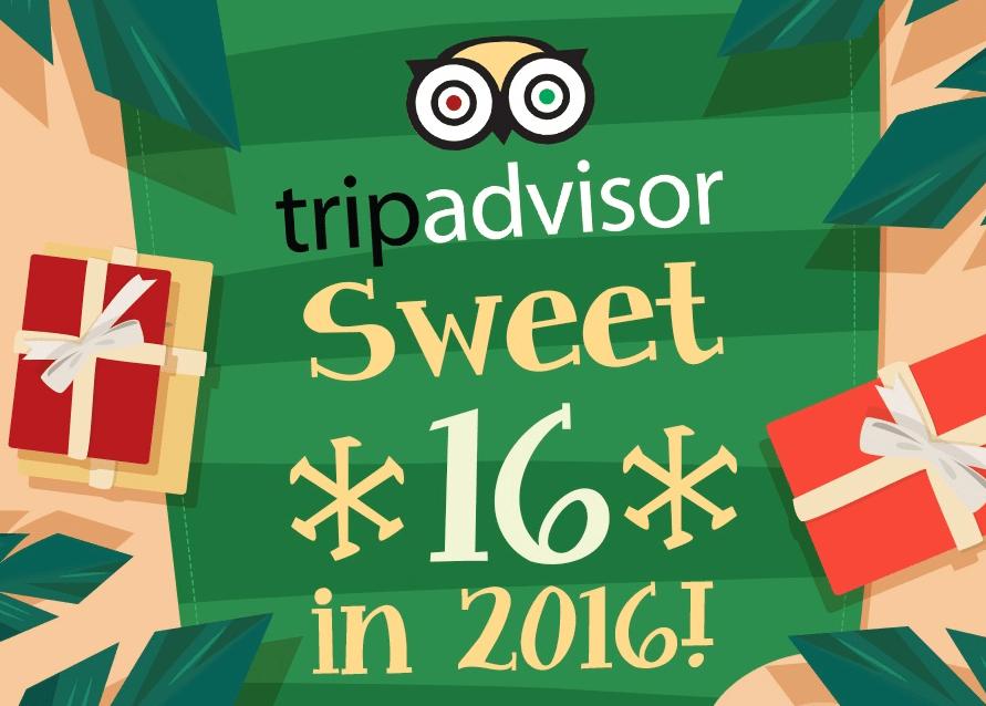 16 Years of TripAdvisor