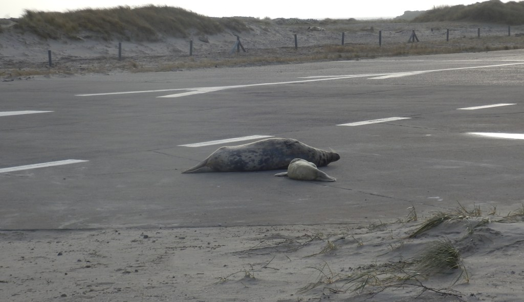 Seals on the airfield