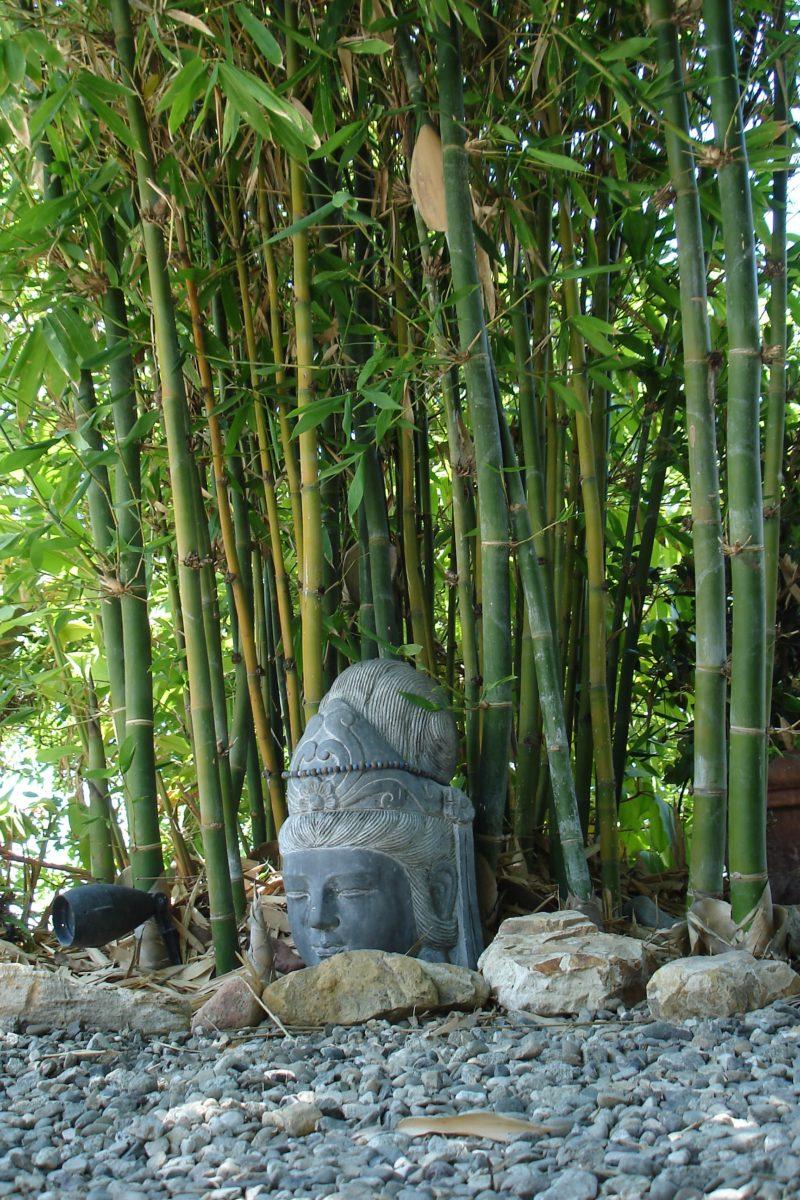 Fullsize Of Buddha Belly Bamboo