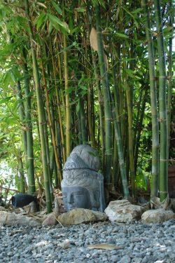 Small Of Buddha Belly Bamboo