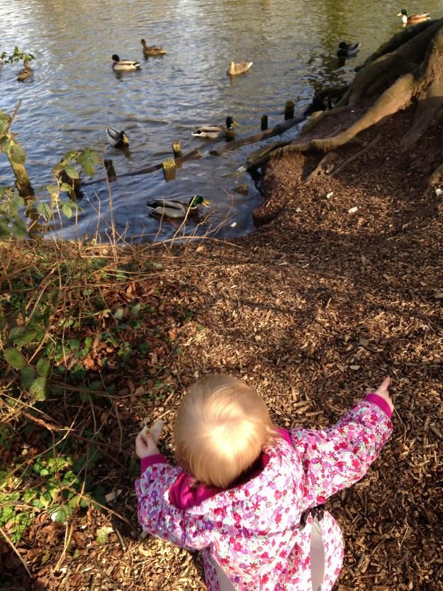 feeding the ducks 7