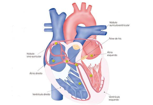fisiologia coracao 2