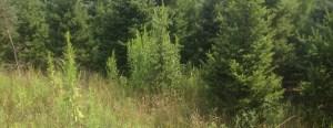 trees24