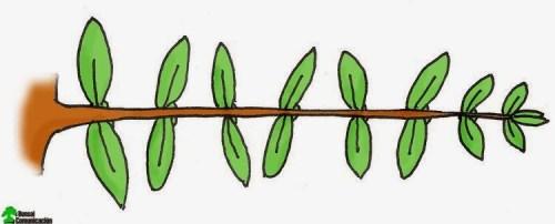 Branchlet not pruned