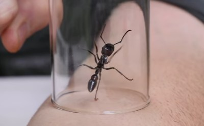 YouTube Schadenfreude: Stung by a Bullet Ant   RECOIL OFFGRID