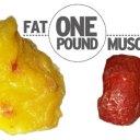 lose a kilo a day