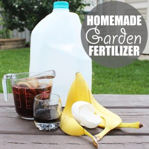 Garden Fertilizer by Of Houses and Trees | Banana peels, black tea, molasses and eggshell make up a super easy organic home garden fertilizer. Just add to an empty jug, mix with rainwater and go!