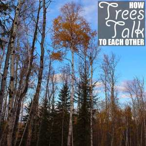 How Trees Talk To Each Other by Of Houses and Trees | We all know trees are living organisms, but did you know they can talk? Learn how trees talk to each other and how you can help them continue to do so.