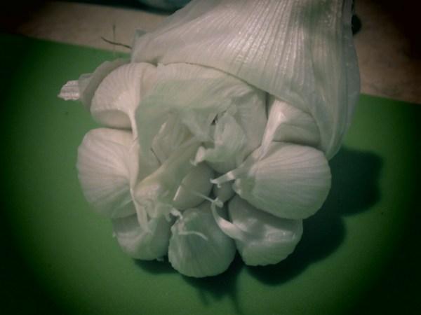 201363 mushrooms4