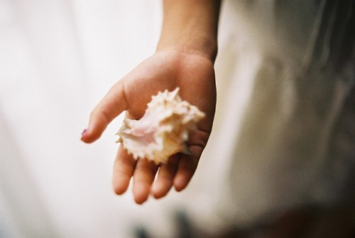 seashell 500x335 {happy weekend!}