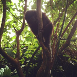 National Zoo Amazonia House 300x300 DC Guide: What To Do
