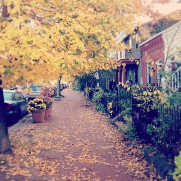 OSBP Instagram Capitol Hill Fall 600x600 Happy Weekend!