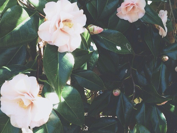 Camellias OSBP Instagram Happy Weekend!