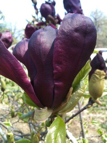 6a00e554ee8a2288330133ec794af2970b 500pi {today I love... spring!}